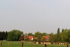 37 - Pferdewiese Laher Wiesen
